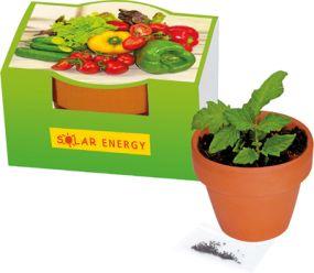 Naschgemüse-Töpfchen Mini-Gurke als Werbeartikel