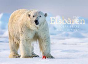 Kalender Eisbären 2021 als Werbeartikel