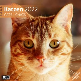 Kalender Katzen 2021 als Werbeartikel