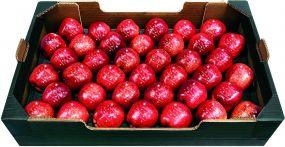 Präsentset 39 Weihnachtsäpfel und Korb